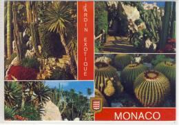 MONACO - Jardin Exotique,  Cactus, Cacti  Cactus Cactaceae Kakteen - Cactusses