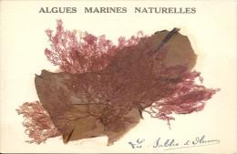 ALGUES MARINES NATURELLES - Sables D'Olonne