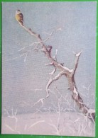 3005 Оld Postcard Art Painting Nikolsky. Owl - Pittura & Quadri