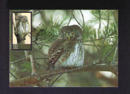 Glaucidium Passerinum Bubo Birds Oiseaux Faune Animals BULGARIA 2009 TRIPLE Maximum Card Mc520 - Eagles & Birds Of Prey