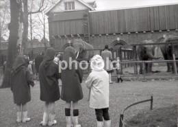 60s ORIGINAL AMATEUR 35mm NEGATIVE ZOO ELEPHANT HOLLAND NETHERLHANDS NOT PHOTO NEGATIVO NO FOTO - Sonstige