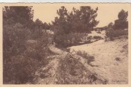 Kalmthout, Duinenzicht (pk28965) - Kalmthout