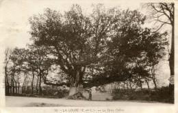 LA LOUPE(EURE ET LOIR) ARBRE(CHENE) - La Loupe