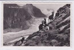 Chevrier Sur L'Alpe / Ziegenhirt Auf Der Alp, Gletscher / Goat Keeper In The Alp - Elevage