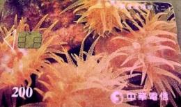Taiwan Telephone IC Card Coral (II)  Marine Life Fauna - Taiwan (Formosa)
