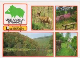 Une Ardeur D´avance - Province De Luxembourg - België