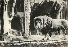 B16-0233 : LION - Lions