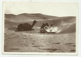 TRIPOLI DESERTO CON FRANCOBOLLO COLONIA ITALIANA DA 10 CENTESIMI 1938 VIAGGIATA FG - Libya