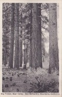 California San Bernardino Mountains Big Timber Bear Valley Alber