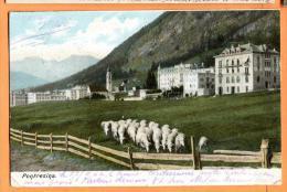PBP-23  Pontresina  Hotels Et Troupeau De Moutons. Schaffe.  Pioneer. Gelaufen In 1904 - GR Grisons