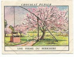 CHROMOS PUPIER - AMERIQUE DU NORD - USA - UNE FERME DU BERKSHIRE. - Chocolat