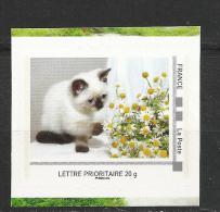 Lettre Prioritaire : Le Chat Siamois. - Hauskatzen