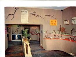 """Cp - PREZ SOUS LAFAUCHE (52) - """"le Zoo De Bois"""" Musée Aux Branches Uniques En France - Autres Communes"""