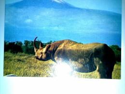 Rhinoceros  Kilimanjaro Tanzania - Tansania