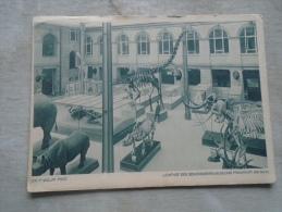 Germany  -  Frankfurt Am Main - Lichthof Des Senckenberg-Museum - Dino     D136117 - Non Classificati