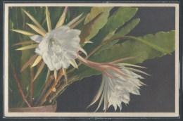 CPA FANTAISIES - Cactus - Cactus