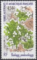 TAAF 2008 Yvert 500 Neuf ** Cote (2015) 12.80 Euro Flore Galium Antarcticum - Terres Australes Et Antarctiques Françaises (TAAF)