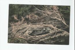 WAIRAKEI N Z THE EAGLES NEST 1732      1908 - Nouvelle-Zélande