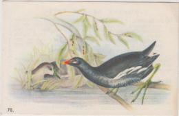 Chromo - Fromagerie Grosjean - Oiseaux De Nos Pays - La Foulque N° 70 - Trade Cards