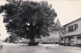 Zoersel Bij Westmalle De Lindenboom Gekarteld - Zoersel