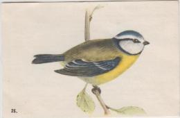 Chromo - Fromagerie Grosjean - Oiseaux De Nos Pays - La Mésange Tête-bleue N° 25 - Chromos