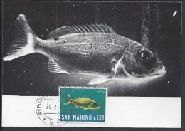 "SAINT-MARIN - 1967 - BELLE CARTE MAXIMUM THEMATIQUE POISSONS "" DENTICE "" - - Lettres & Documents"