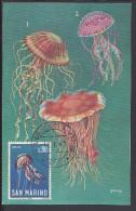 "SAINT-MARIN - 1967 - BELLE CARTE MAXIMUM THEMATIQUE POISSONS "" MEDUSA "" - - Lettres & Documents"