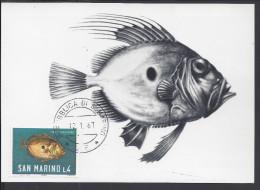 "SAINT-MARIN - 1967 - BELLE CARTE MAXIMUM THEMATIQUE POISSONS "" PESCE SAN PIETRO "" - - Lettres & Documents"