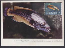 "SAINT-MARIN - 1965 - BELLE CARTE MAXIMUM THEMATIQUE POISSONS "" LABRO PAVONE "" - - Lettres & Documents"