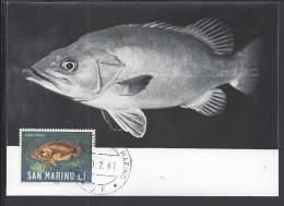 """SAINT-MARIN - 1967 - BELLE CARTE MAXIMUM THEMATIQUE POISSONS """" CERNIA BRUNA """" - - Lettres & Documents"""