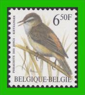 BUZIN - 2577** Phragmite Des Joncs / Rietzanger - H5 (groene Gom Verte) - 1985-.. Pájaros (Buzin)