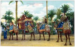 Chameaux Portant Les Cymbaliers D'es Noces Arabes - EGYPT - Kairo