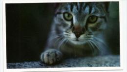Four Paws Bulgaria.   CP Chats, Ayant Circulée - Chats