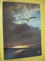 CPM 509 - COTE AQUITAINE - TEMPS D'ORAGE SUR LA GRANDE PLAGE - MOUETTE - Oiseaux