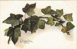 Branche De Lierre - Barde - Fleurs, Plantes & Arbres