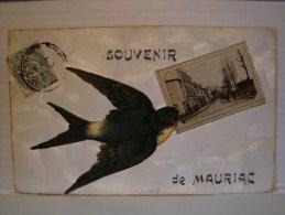 15 CANTAL MAURIAC SOUVENIR ( ENPHOTO DANS LE BEC DE L'OISEAU L'ENTREE DE L'AVENUE DE LA GARE) - Mauriac