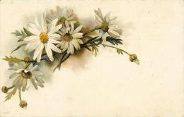 Marguerites  - Carte Précurseur - Fleurs, Plantes & Arbres