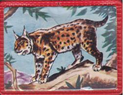 Image Plastifiée - Lynx - Offert Par Vitho - N°16 - Vieux Papiers