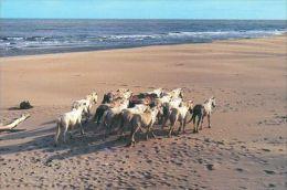 HORSES / PFERDE / CHEVAUX /  POSTCARD UNUSED     ( H  3277  / - Pferde