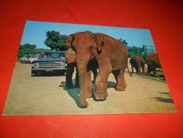 A2205 Elefante Indiano Zoo Safari Di Fasano Non Viaggiata Pieghina Angolo - Elefanti