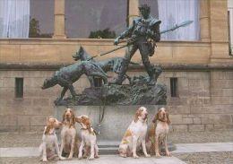 DOGS / HUNDE / CHIENS /  -    BRACCO ITALIANO  Postcard  Unused   ( P 3573 ) - Hunde