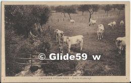 L'Avesnois Pittoresque - Prairies Et Pâturages (vaches) - Avesnes Sur Helpe