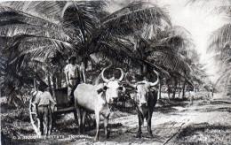 Cpa : TRINIDAD, Coconut Estate, Attelage De Buffles à Longues Cornes Tirant Une Charette  (51.74) - Trinidad