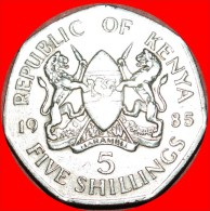 ★COCK WITH LIONS: KENYA ★ 5 SHILLINGS 1985! LOW START★NO RESERVE! DANIEL TOROITICH ARAP MOI (1979-2002 - Kenya
