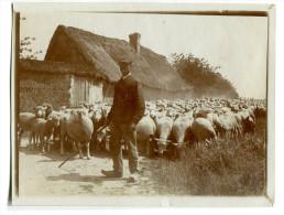 Photographie priv�e Troupeau de moutons  berger chaumi�re Etrechy ? vers 1900