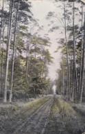 Thielen Tielen Kasterlee Dreef In Het Bos Casterle 1907 Kempen - Kasterlee