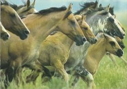 HORSES / PFERDE / CHEVAUX /  POSTCARD UNUSED     ( H  3309  / - Pferde