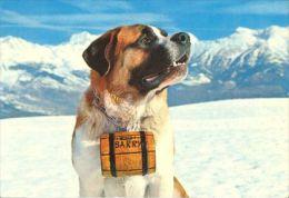 DOGS / HUNDE / CHIENS /  -    SAINT BERNARD  Postcard  Used   ( P 718 ) - Chiens