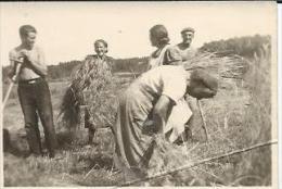 Photo Format 8 X 5.5 Cm   Agriculture  Les Foins Culture .vers 1930 - Métiers
