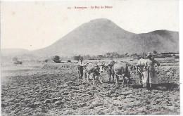 LABOURAGE - Attelage - Auvergne, Le Puy De Dome - Landbouw